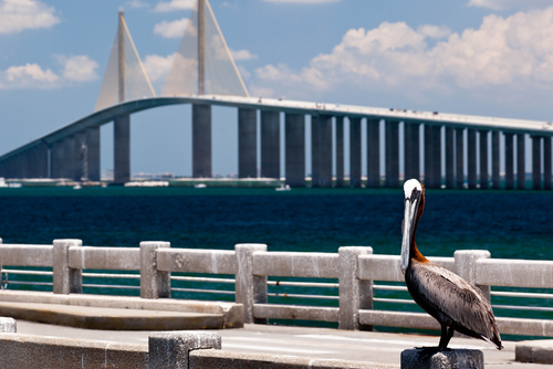 Sunshine skyway tampa bay reporter for Sunshine skyway fishing pier