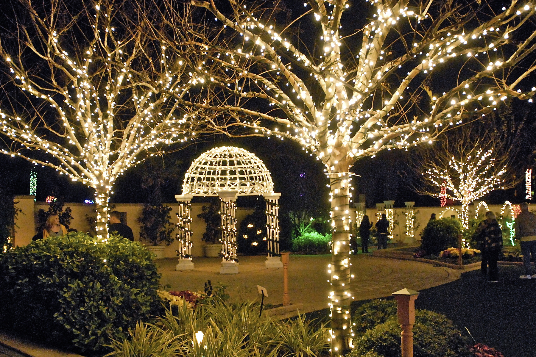 Pinellas holiday lights in the gardens florida for Holiday lights botanical gardens